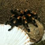 micropolis-araignée